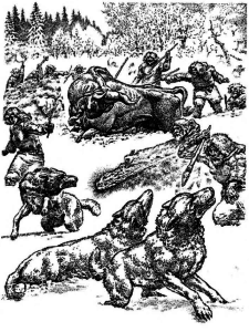 Early Lithuanians hunt an aurochs ( tauras ) while keeping wolves at bay.
