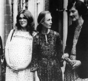 Doctors Birutė Galdikas, Jane Goodall and Dian Fossey (left to right) each enjoyed great success as a field scientist.