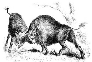 Two young stumbrai having a struggle (head butting). From the book Lithuania from the Earliest Times to the Year 1882 by Adomas H. Kirkoras, Moscow, 1882.