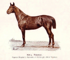 "Color plate drawing of a Trakehner (Trakėnai) horse named ""Mongolin,"" born in 1886."