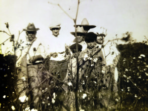 Lithuanians picking cotton in Oklahoma.