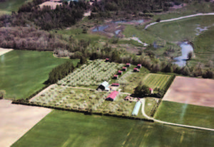 An aerial view of the Bersėnas family farm as it appeared in the mid 1970s. Now, Highway 402 runs from left to right through the center of the property.