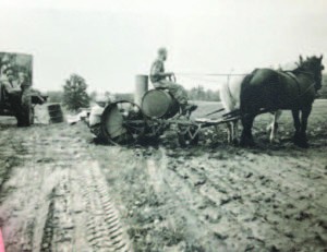 Planting tobacco with a mechanized planter pulled by a team of horses in the early 1950s.