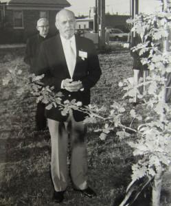 """,,Stelmužiuko"""" sodinimas Juzefos Daužvardienės garbei prie muziejaus 1989 metais."""