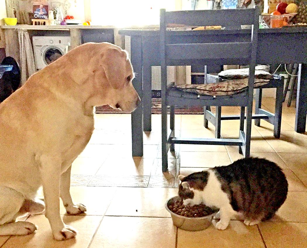 Šuo Rūkas ir katė Pica.
