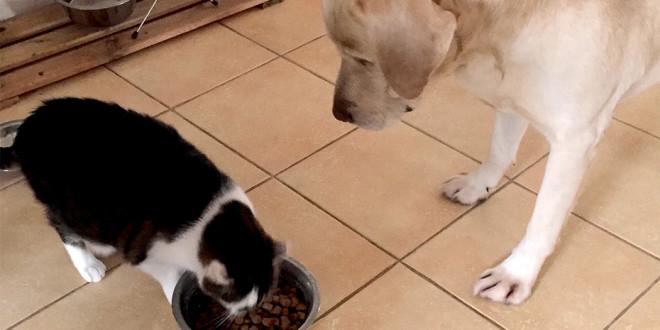 Vaizdas keliantis juoką ir gailestį. Supainioti dubenėliai, leido katei atkeršyti nekenčiamam jos konkurentui.