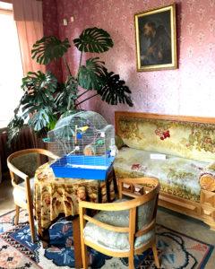 Rašytojo jubiliejui bus restauruoti kai kurie muziejaus baldai ir daiktai. Kanapa, ant kurios sėdėjo Maironis ir kiti literatūros šviesuoliai.