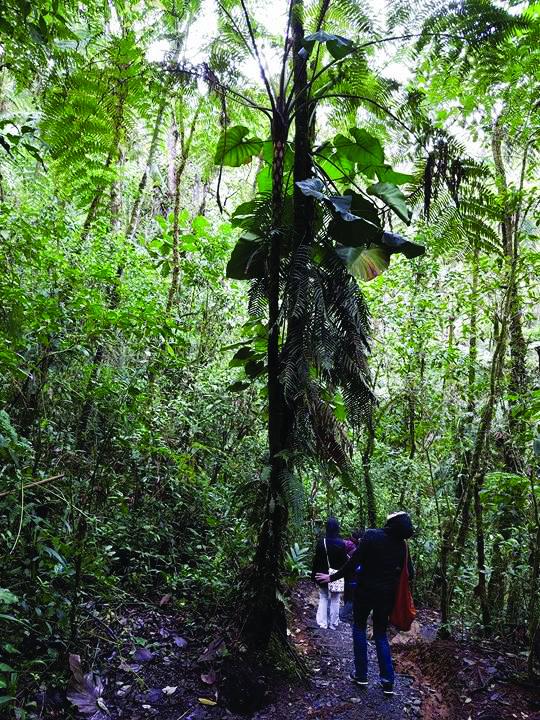 Gvatemalos gamta.