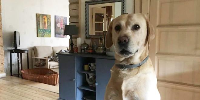 Šuo, kuris nemėgsta būti vienas.